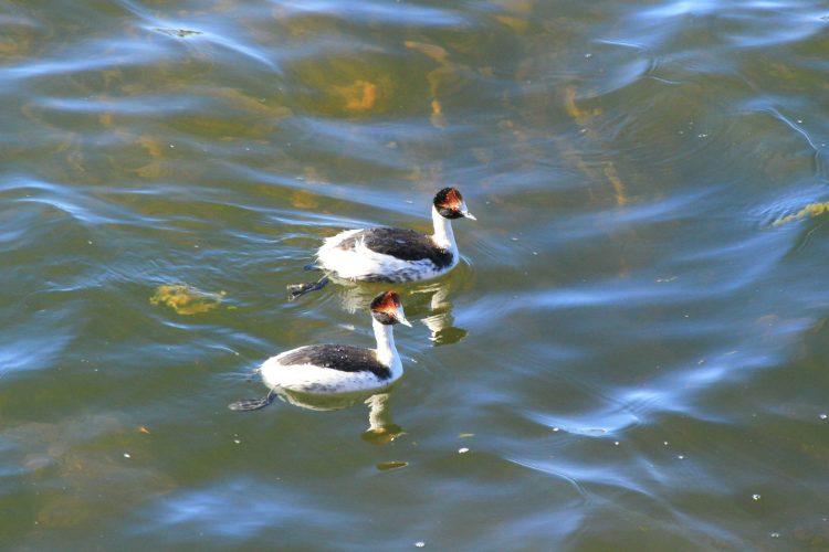 Día Nacional del Ave: Conocé 6 de las aves más emblemáticas del país