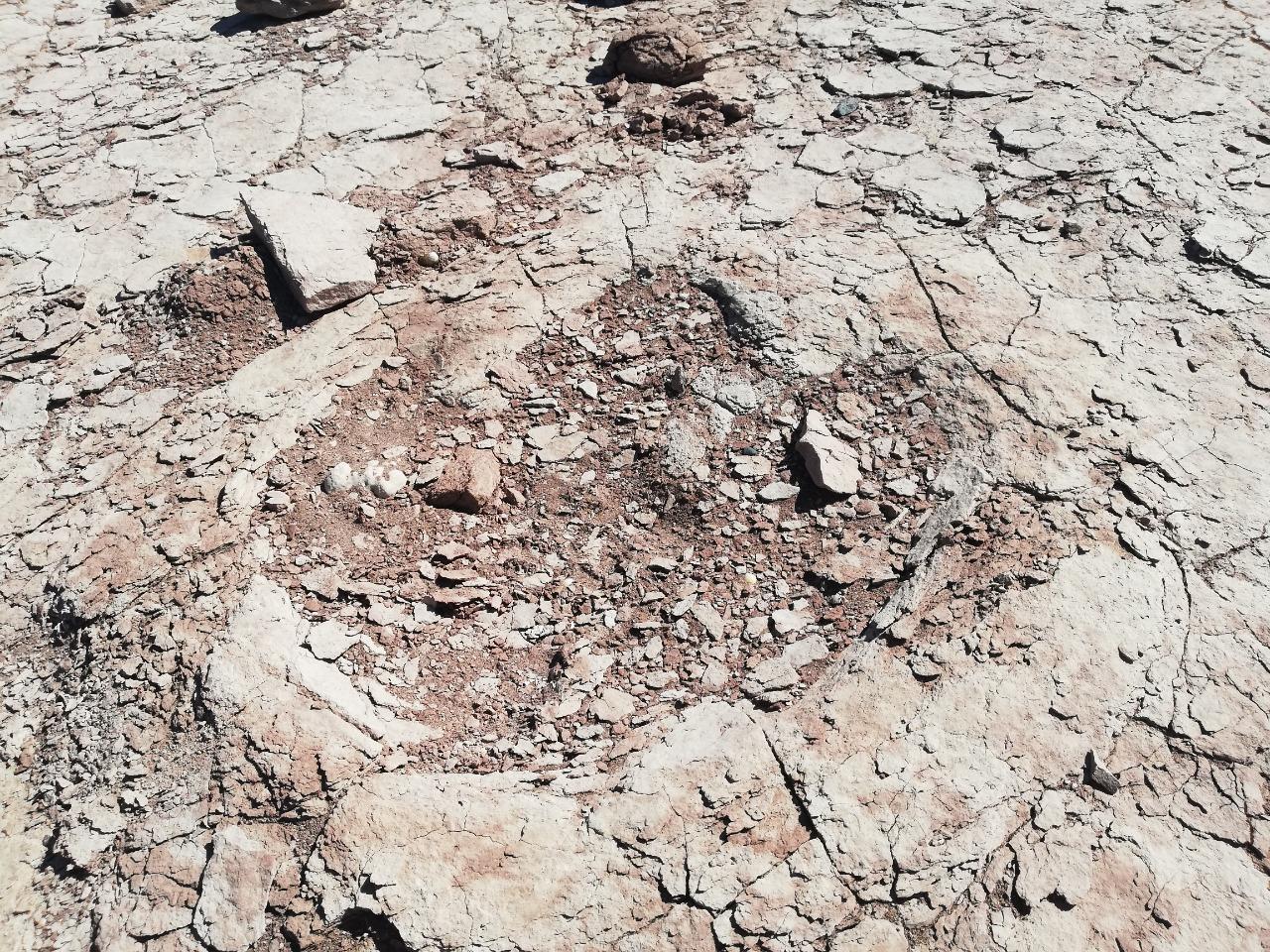La Prefectura Descubrio Huellas De Dinosaurio En La Patagonia Argentina Gob Ar La huella de un miembro anterior y posterior de un saurópodo, rastrillada del saurópodo y un diente de tiburón. huellas de dinosaurio en