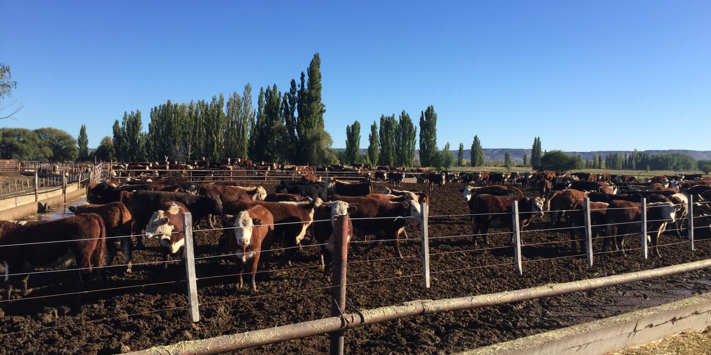 La Unión Europea reconoce a la Patagonia Norte A como región libre de aftosa sin vacunación